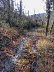 most of the woodland paths have become small rivers